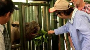Malaysia's Last Sumatran Rhino Dies