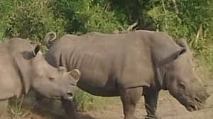 Woman Who Runs Wildlife Orphanage Opens Up About Night Poachers Killed Two Baby Rhinos
