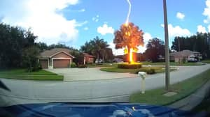 Incredible Video Shows Lightning Striking Tree Despite Clear Blue Skies Above