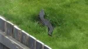 Woman Spots 4ft-Long 'Crocodile' In Back Garden In Yorkshire