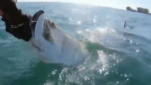 Massive Hammerhead Shark Snatches Catch From Fisherman's Hands