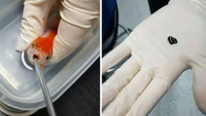 Woman Spends $500 Saving Her Beloved Pet Goldfish From Certain Death