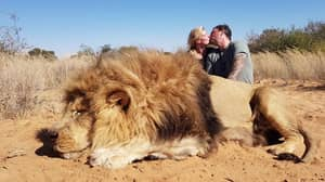 Canadian Couple Kiss For A Photo Knelt Behind Lion They Killed