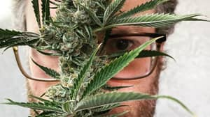 Seth Rogen's Weed Company's Website Crashes Due To High Demand