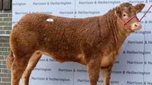 Cow Named After Posh Spice Breaks World Sales Record