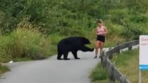 Runner Stays Unbelievably Calm During Close Encounter With Black Bear