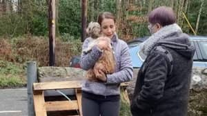 Owner Reunited With Dog That Went Missing Almost Eight Years Ago