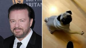 Ricky Gervais Goes Off After Man Found Guilty For Teaching Dog To 'Nazi Salute'