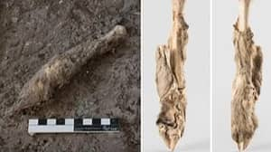 1600-Year-Old Mummified Sheep Found Perfectly Preserved In Iranian Salt Mine