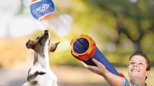 Aldi Is Selling Nerf Guns So You Can Play Fetch With Your Dog