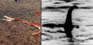 People Thought The Loch Ness Monster Was Found Dead, But All Is Not What It Seems