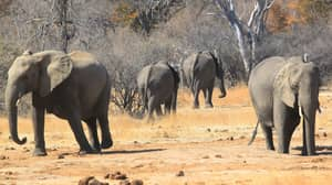 Conservationists Triumph As Zimbabwe Bans All Coal Mining In National Parks