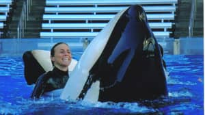 Today Marks 10 Years Since SeaWorld Trainer Dawn Brancheau Was Killed By Tilikum