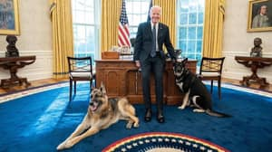 Joe Biden's Dogs Moved Out Of White House Following 'Biting Incident'