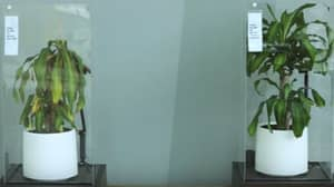 IKEA Experiment Shows How Negativity Can Stop Growth And People Can Learn From It