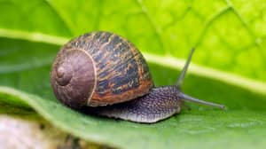 TikTok Users Have Become Obsessed With 'Immortal Snail' Question