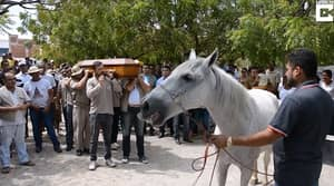 Heartbreaking Video Shows Horse Crying At Owner's Funeral