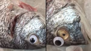 Store 'Closed Down' For Putting Googly Eyes On Fish To Make Them Look Fresher