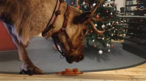 Parents Can Record Rudolph Eating Carrots In Their Home Thanks To Free App