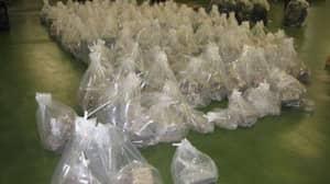 Tonne Of Cocaine 'Worth £100 Million' Found In Banana Shipment