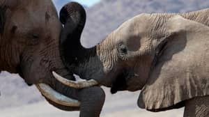 British Troops Deployed To Fight Elephant Killers In Africa