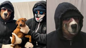 Puppy Thieving Gangs Give Chilling Warning To Dog Owners