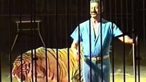 Circus Performer Dies After Being Mauled By Four Tigers