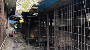 South Korea Shuts Down Its Largest Dog Meat Slaughterhouse