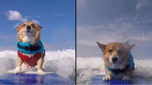 Dog Surfs As Therapy To Recover From Horrific Attack That Scarred Him