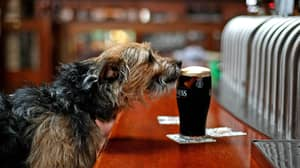 Wetherspoon To Ban All Dogs From Its Pubs