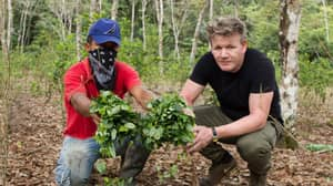 Viewers React To 'Gordon Ramsay On Cocaine' Documentary
