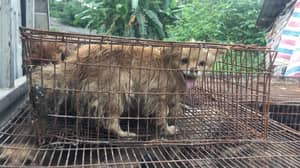 1.5 Million People Sign Petition To Ban China's Yulin Dog Meat Festival
