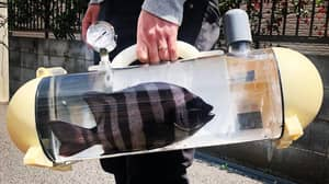 New Invention Will Allow You To Take Your Fish For A Walk