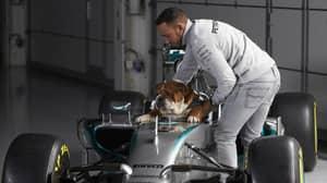 Lewis Hamilton Says His Bulldog Roscoe Is Now 'Fully Vegan'