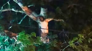 Locals Gather In Colombia Despite Lockdown As Image Of Jesus Christ 'Appears In Tree'
