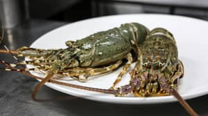 Switzerland Becomes The First Country To Make Boiling Live Lobsters Illegal