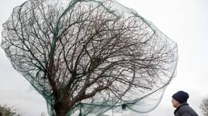 Local Council Faces Backlash After Placing Nets On Trees To Repel Birds