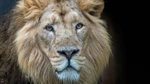 Body Of Suspected Poacher Eaten by Lions Has Now Been Identified
