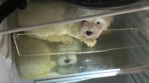 Police Find Four Puppies Stashed In Fridge By Suspected Dog Traffickers
