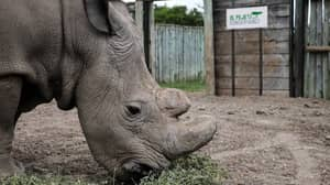 Wildlife Poachers In Kenya To Reportedly Face Death Penalty
