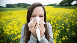 UK Hit By A Pollen Bomb This Bank Holiday