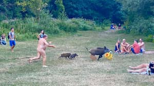 Nudist Chases Boars Through Park After They Steal His Laptop