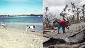 None Of The Hundreds Of Dogs On Puerto Rico Beach Survived Hurricane Maria