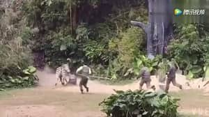 Zookeeper Attacked And Dragged Away By Zebra In Front Of Crowds