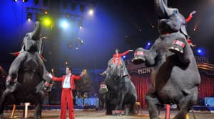 New York Bans Circuses From Using Elephants