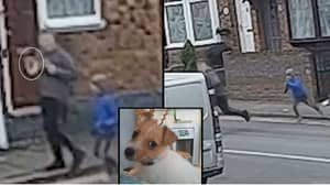 Heartbreaking Moment Young Boy Chases Man Who Stole His Puppy