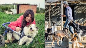 Disabled Dogs Get New Lease Of Life At Animal Sanctuary