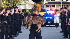 Faithful Police Dog Given Final Salute After Terminal Diagnosis