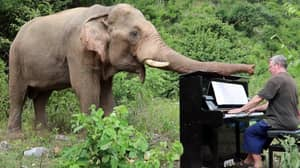 Retired Pianist Plays To Old, Injured And Handicapped Elephants Who've Lived Stressful Lives