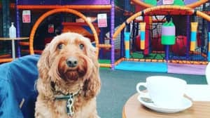 UK Soft Play Centre Opens Its Doors To Dogs